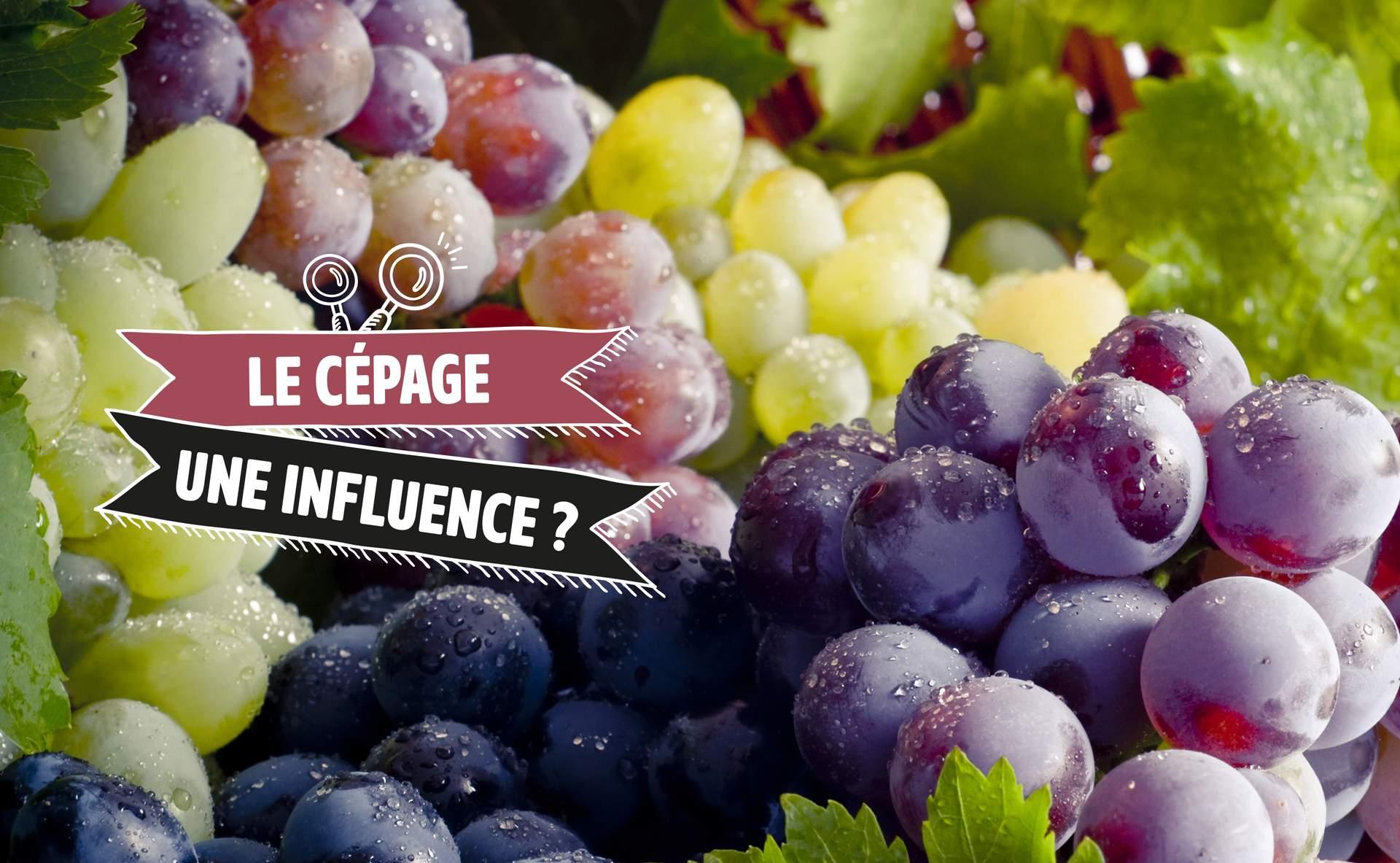 Read more about the article Les cépages